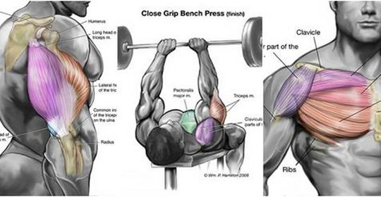 Chest And Triceps Workout: Killer Triceps Workout For Building Chest and Triceps Together