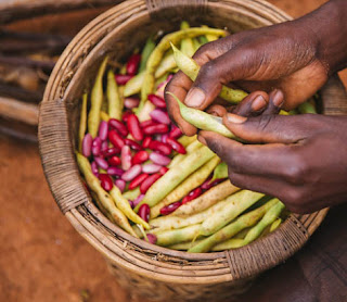 Shelling beans in a small African village outside of Lilongwe Malawi
