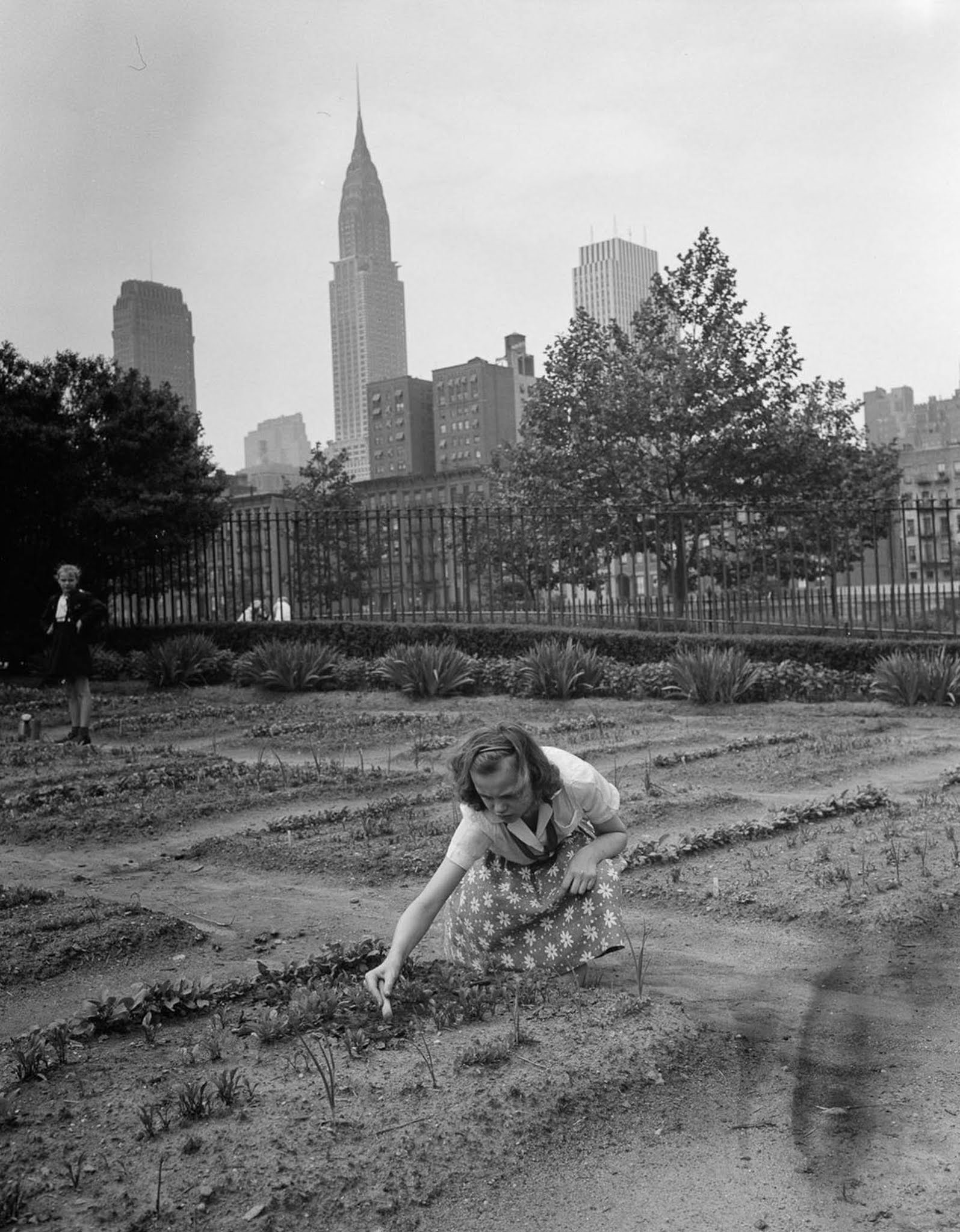 A girl tends a victory garden at a school on 1st Avenue. Victory gardens, also called war gardens or food gardens for defense, were vegetable, fruit, and herb gardens planted at public parks in support of the Allied troops.