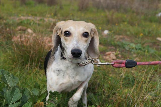 """Κανένα σκυλάκι ή γατάκι νηστικό: Δίκτυο εθελοντών από τον Σύλλογο Άργους """"Λάϊζα"""""""