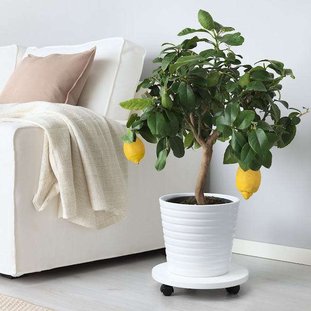 najbolje biljke