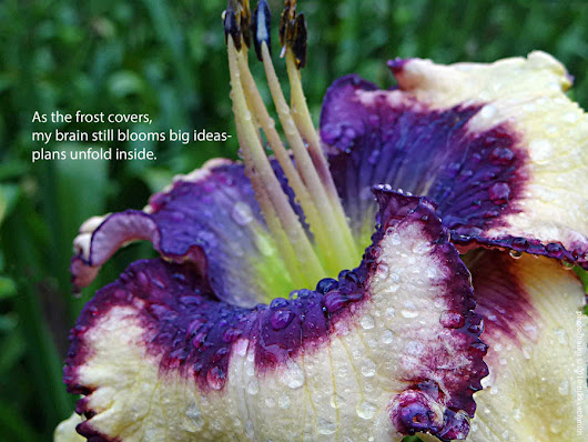 Why Don't People Volunteer? | Daylily Blog ~ a girl and her garden - a daylily blog