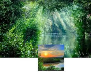 foresta amazzonica sfondo