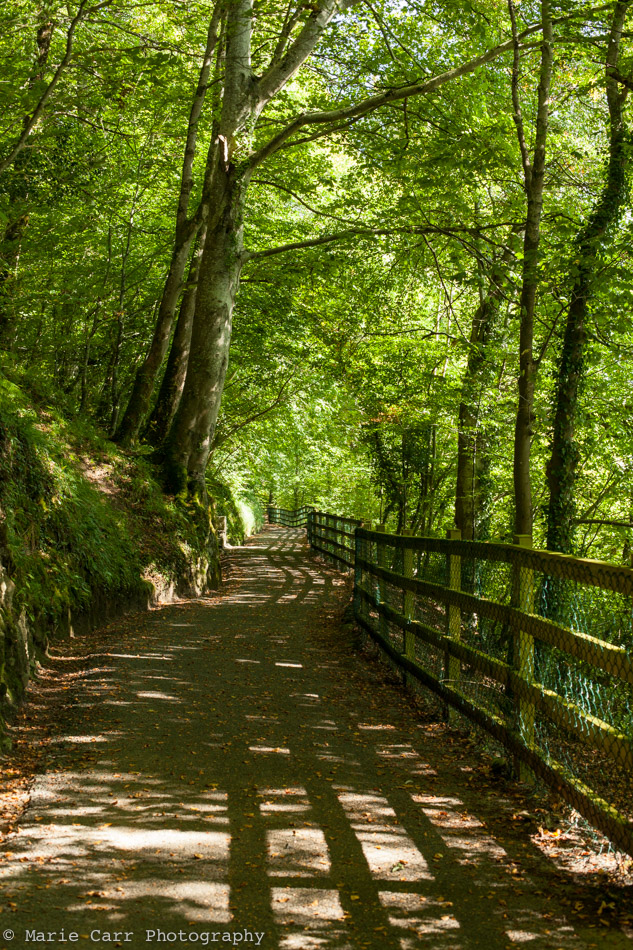 The leafy green Lower Bank walk trail in Donegal Town