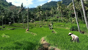 Desa Alasbayur Konsep Wisata Sehat Disaat Pandemik