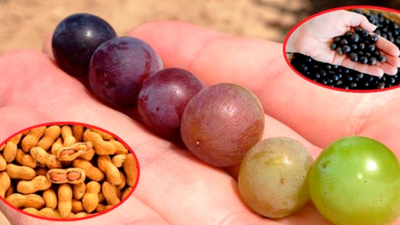 Científicos mexicanos descubren molécula que inhibe el cáncer en cacahuates, moras y uvas.