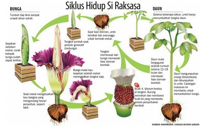 Unduh 5300 Koleksi Gambar Bunga Raflesia Simple Gratis