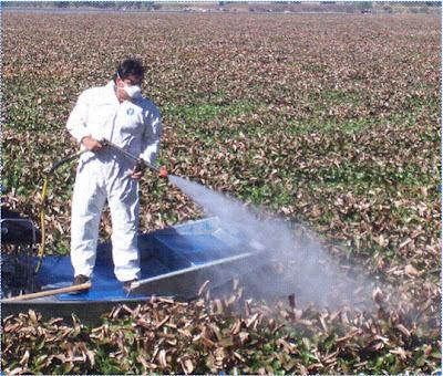 fumigacion con agroquimicos