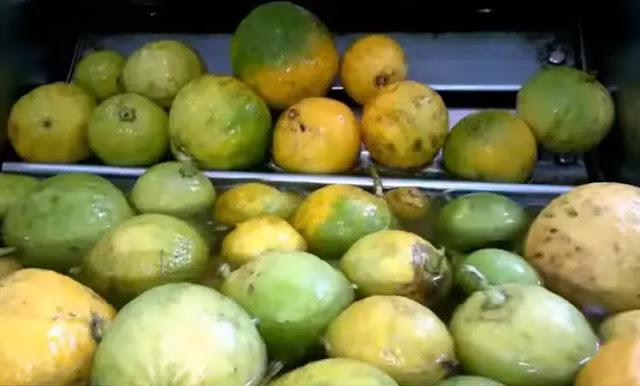 حمام البرغموت أو الليمون العطري أو الليمون البرغامي
