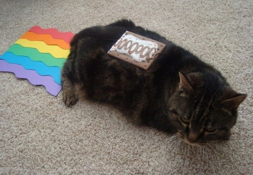 [Image: real-life-nyan-cat.jpg]