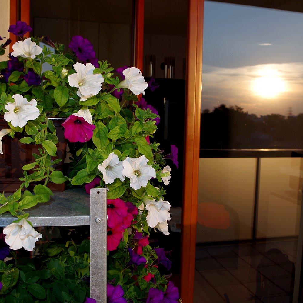 Balkon W Domu Jednorodzinnym: Świerk Biały I Kolorowe Kwiaty, Czyli Rośliny Balkonowe