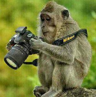 Monyet Fotografer Yang Sedang Memakai Camera Nikon Yang Ingin Mengambil Sebuah Pemandangan Tapi Sayang Kayaknya Si Monyet Kebingungan Memakainya