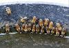 Γρήγορη πατέντα για νε φτιάξετε ποτίστρα μελισσιών από τον μελισσοκόμο Φώτη Βέλλιο!!