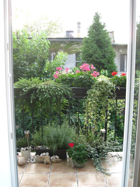 balkon w kamienicy, bakopa, pelargonie, komarzyca