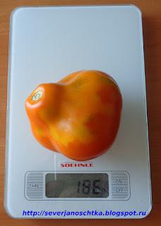 оранжевые груши в теплице