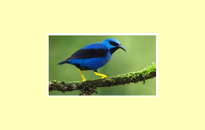 77 Contoh Gambar Hewan Invertebrata Dan Vertebrata Terbaru