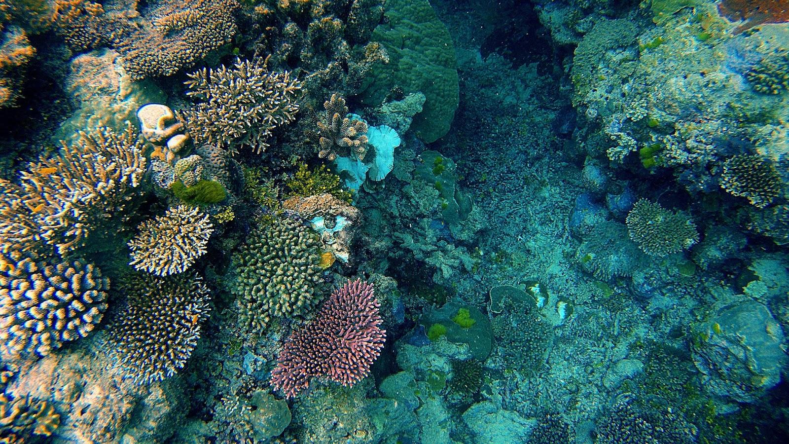 珊瑚,大堡礁