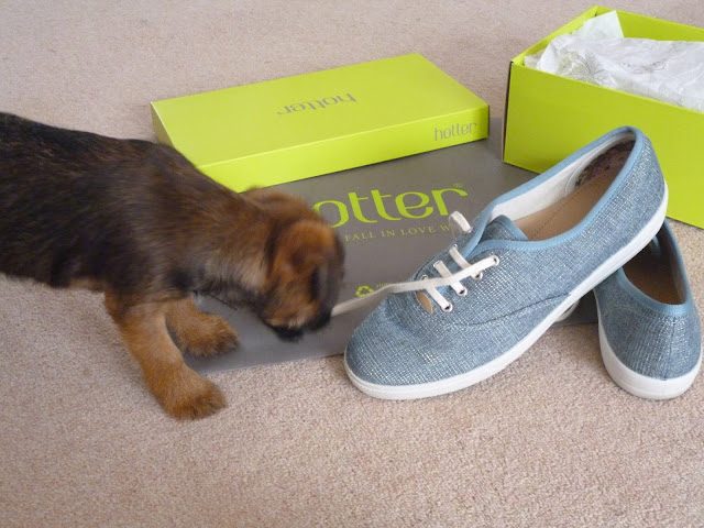 Puppy explores box and shoes from Hotter shoes