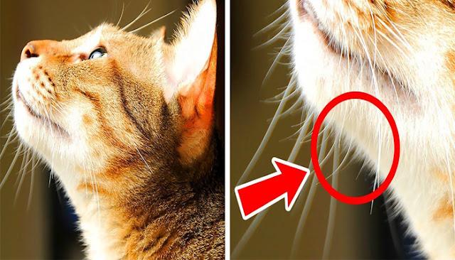 7 حقائق مذهلة عن القطط ستجعلك تقع في حبها أكثر