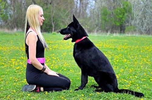 اسعار كلاب بلاك جاك