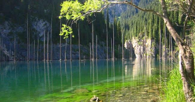 Terdambakan 7 Hutan di Dalam Air yang Indah di Dunia