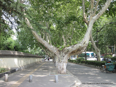 Trees in Najing