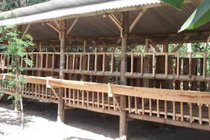 14 Gambar Desain Kandang Kambing Bambu Panggung