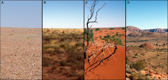 New insights into survival of Australia's ancient Western Desert peoples