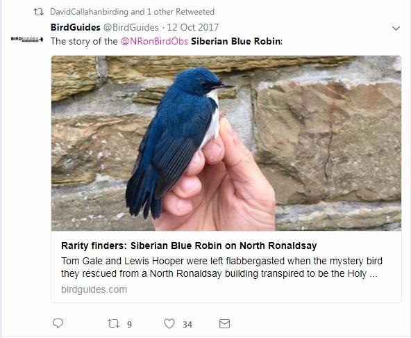 Siberian Blue Robin - North Ronaldsay