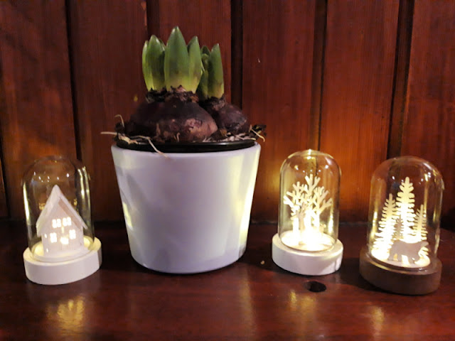 A pot of hyacinth bulbs on a wooden mantelpiece.  To the left and right are three small bell-jar-type ornaments containing a house, some trees and a reindeer, and some pine trees and a polar bear.  They are all lit up