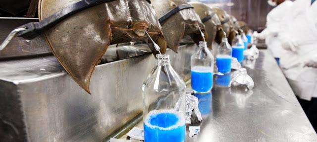 Mực máy in nằm trong top 8 chất lỏng đắt đỏ nhất hành tinh