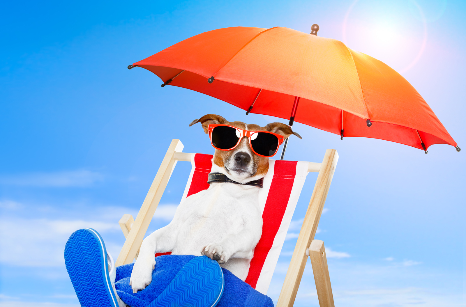 summer infant beach chair best gaming chairs 2018 reddit dog sunbathing on a deck khoirulpage