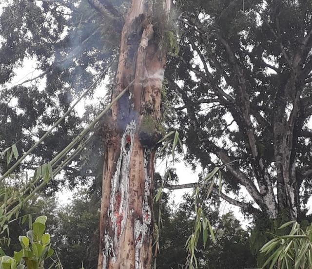 Berita Video: Misteri Pohon Tua Menyemburkan Api Di Desa Penakir