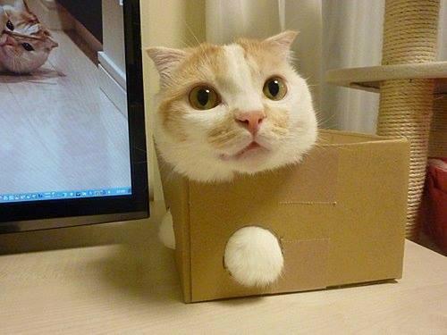 Cats humor #2