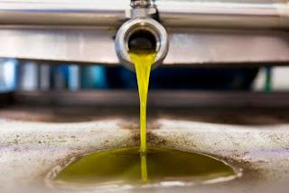120.000 τόνους η φετινή παραγωγή ελαιολάδου στην Περιφέρεια Πελοποννήσου