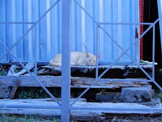 ポンペイで見つけた猫