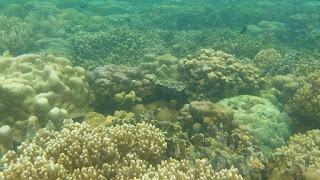 snorkeling pahawang indonesia
