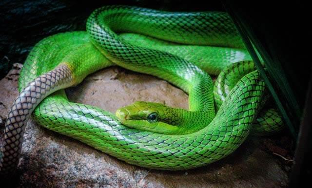 Evolução das Serpentes