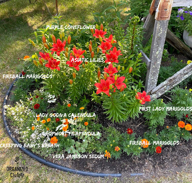 Photo with captions of a portion of a flower bed