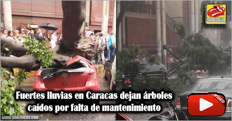 Fuertes lluvias en Caracas dejan árboles caídos por falta de mantenimiento
