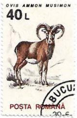 Selo Muflão