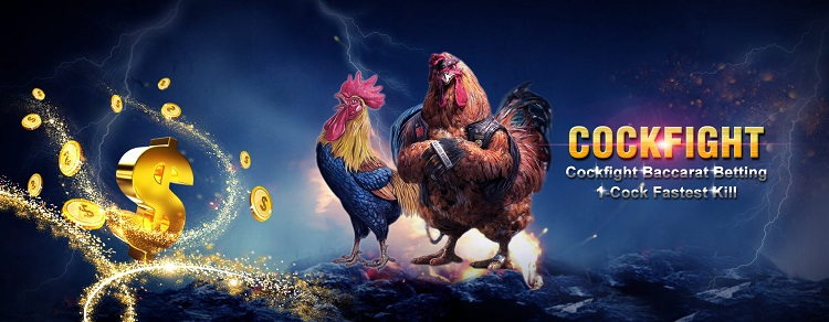 Cock Fighting Malaysia