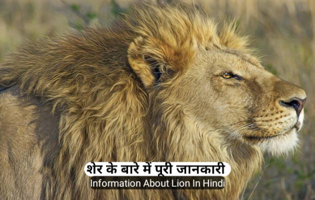 about-lion-in-hindi