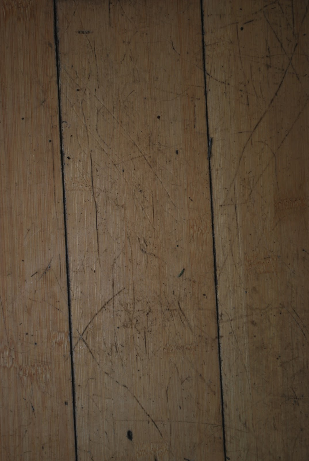 Bamboo Grove Photo Bamboo Floors