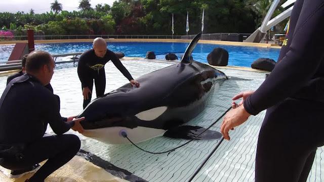 audición orcas loro parque