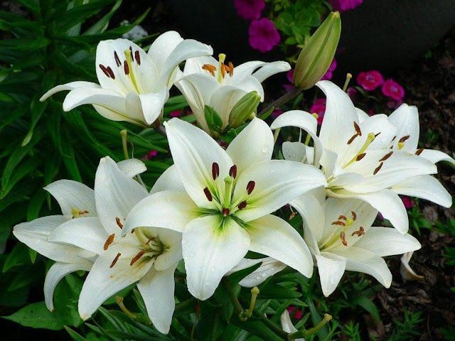 y nghia hoa hue ta