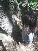texture toucher nature bois sortie sens cinq