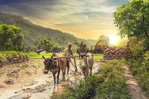 उत्तर वैदिक काल  में कृषि  पशुपालन