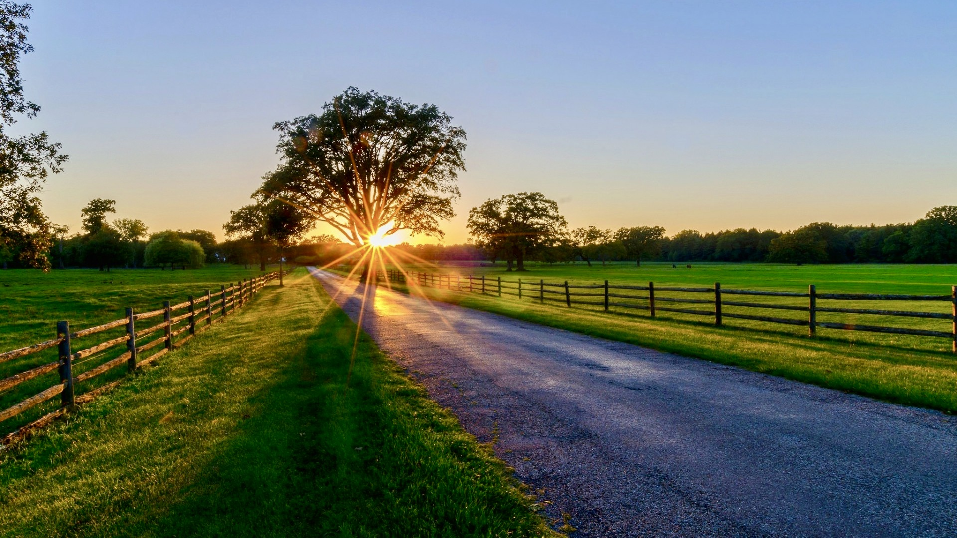 Picture of a road with fields either side, tree and sunrise ahead.