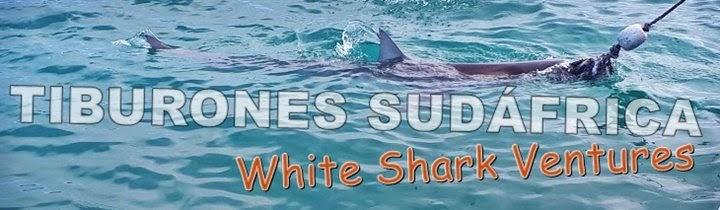 Tiburones-Sudáfrica-buceo-jaula